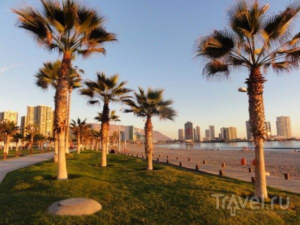 Прогулки по Икике. Playa Cavancha / Чили