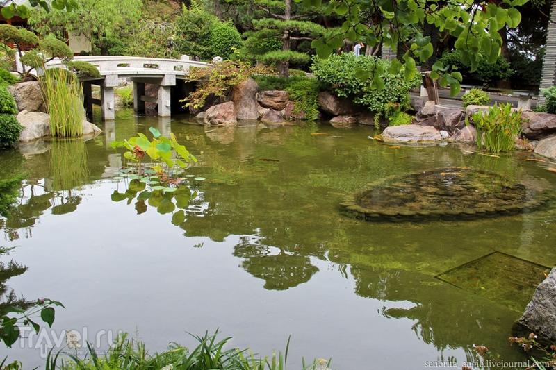Японский сад в Монако / Фото из Монако