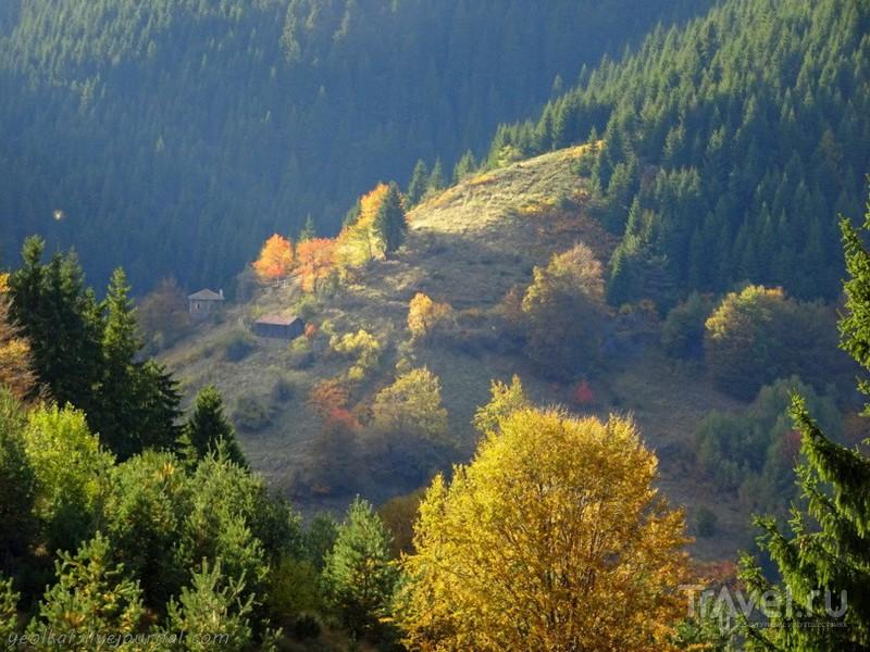 На конях и без по Родопским тропам. Знакомство с конями / Фото из Болгарии
