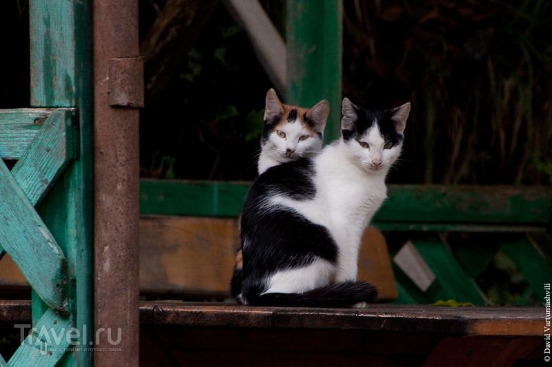 Окрестности Батуми за один день: Махунцети и Гонио / Фото из Грузии