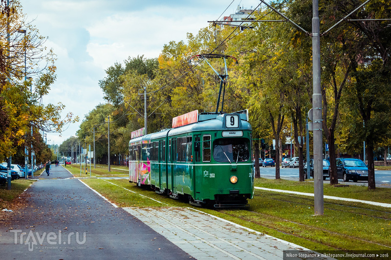 Осенние зарисовки из Белграда / Фото из Сербии