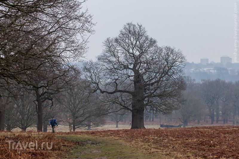 Ричмонд-парк / Фото из Великобритании
