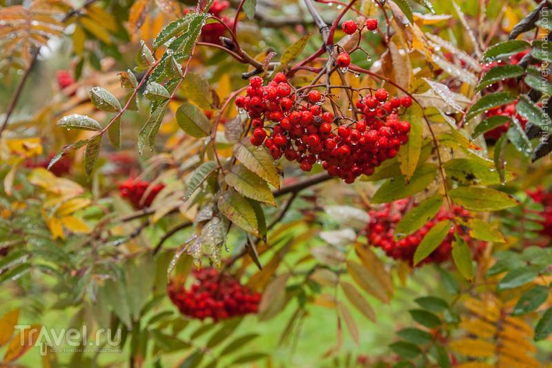 Ботанический сад Kew Gardens / Фото из Великобритании