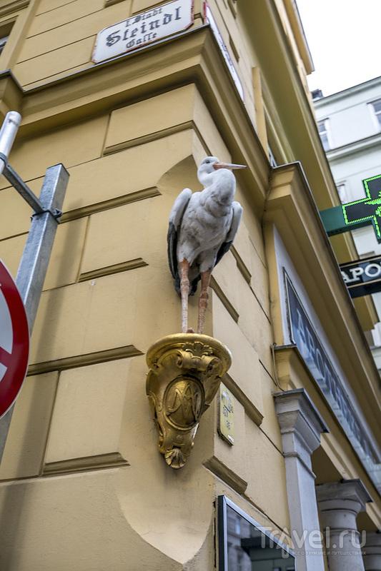 Блистательная Вена / Фото из Австрии