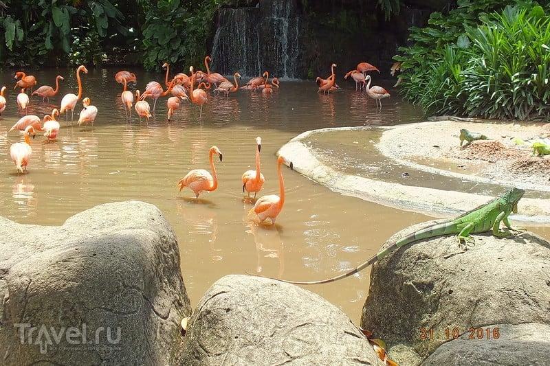 Сингапур. Парк птиц / Фото из Сингапура