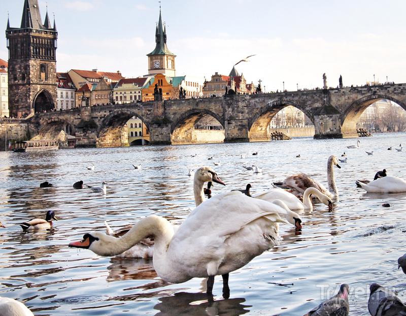 Прага: это твой мост, Карл! / Чехия