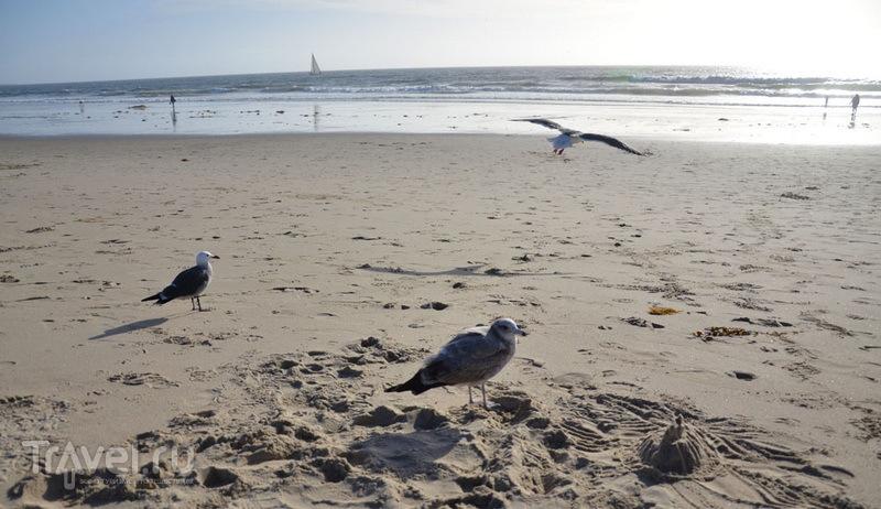 Птицы на Венис-бич / Фото из США