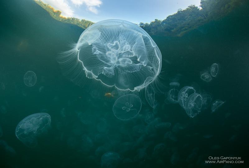 Залив медуз, Раджа-Ампат, Индонезия / Фото из Индонезии