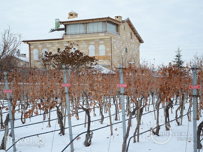 В Турции не только употребляют, но и производят вино / Тунис