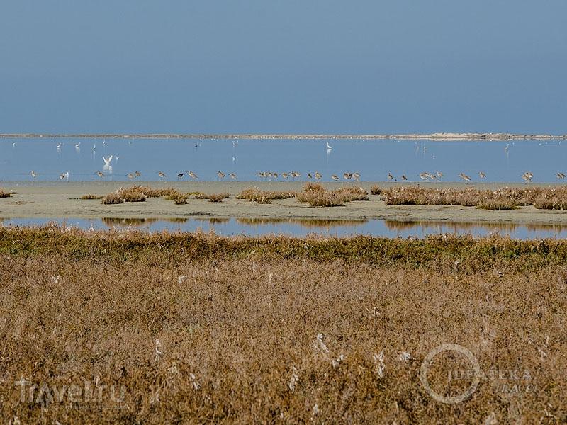 Заболоченная пустыня Джербы / Фото из Туниса