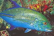 Голубой тунец. Фото: holidaym.ru