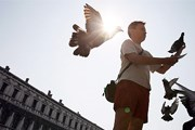 На площади Сан-Марко птицы привыкли к людям. // GettyImages