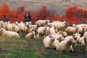 Окрестности Тбилиси недалеко от озера Лиси. // nukri.org