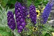 Выставочная клумба Фестиваля цветов. // pbase.com