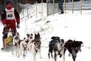 Международные состязания по собачьим бегам в упряжках проходят в Германии. // picture-newsletter.com