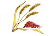 Красный рис // herbindex.net