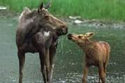 Туристы смогут наблюдать за животными, не беспокоя их. // ru.poezdka.de