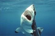 Акулы - нежеланные гости на пляжах. // GettyImages