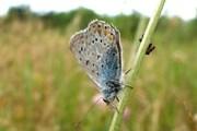 На территории бухты обитает 1530 видов бабочек. // Travel.ru