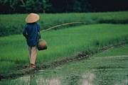 Экзотика Вьетнама манит туристов. // GettyImages