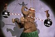 Безработные слоны выступают перед туристами. // GettyImages