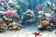Коралловые рифы - под угрозой исчезновения. // simaquarium.com