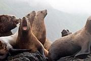 Тюлени на острове Монерон // Виктор Морозов