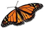 Крупнейший в мире павильон для бабочек - недалеко от Лондона. // Google.com