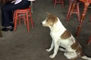 В Корее издавна употребляют мясо собак в пищу. // photo.net