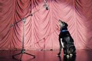 Собак не пустят в театр. // GettyImages
