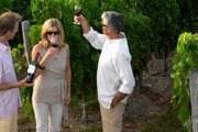 Туристы смогут продегустировать вина и посетить виноградники. // GettyImages