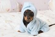 Отели охотнее принимают гостей с собаками. // GettyImages