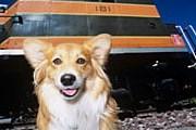 Владельцы собак могут вздохнуть с облегчением. // GettyImages