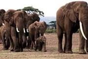 На территории заповедника обитает около 300 слонов. // DPA