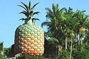 «Большой ананас» привлекает множество туристов. // eastcoastcountry.com.au
