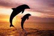 Интенсивный вылов рыбы оставляет дельфинов без корма. // GettyImages