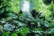 Ранее 420 тысяч квадратных километров региона было покрыто лесами. // ИТАР-ТАСС