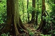 Цель акции – защитить леса от вырубки. // JH Pete Carmichael