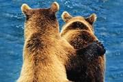 В северной части парка можно понаблюдать за волками, бурыми медведями и гризли. // Travel.ru