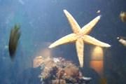 В океанариуме - около 200 видов рыб и других подводных обитателей. // А.Баринова