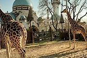 Праздник в зоопарке продлится неделю. // wordpress.com