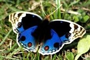 Для городских бабочек создан специальный заповедник. // photodelhi.blogspot.com