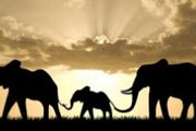Слоны больше не будут развлекать публику. // ami-tass.ru