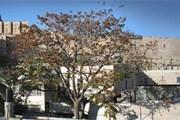 Город Давида - в числе важнейших достопримечательностей Иерусалима. // cityofdavid.org.il