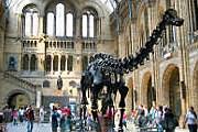 Под скелетом диплодока можно разместиться на ночлег. // milesfaster.co.uk