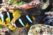 В океанариуме обитают 4 тысячи рыб. // oceanarium-sochi.ru