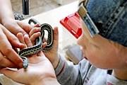 Посетители смогут сфотографироваться с животными. // moscowzoo.ru