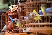 Посетители смогут увидеть экзотических птиц. // johnharveyphoto.com