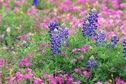 Монте-Карло превратится в цветущий сад. // Travel.ru