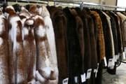 Покупка шуб привлекает туристов в Грецию. // Ratanews.ru
